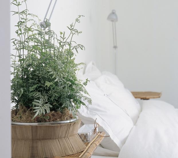kwiaty do sypialni